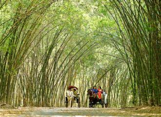 Bài văn mẫu thuyết minh về cây tre Việt Nam mới nhất