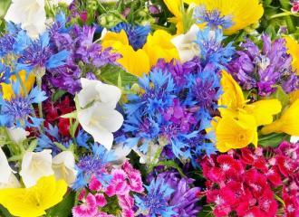 Ý nghĩa của các loài hoa quen thuộc mà có thể bạn chưa biết